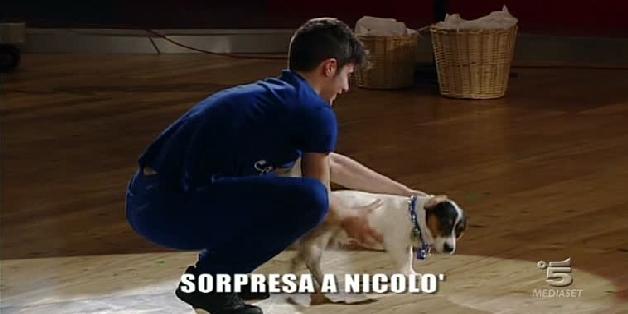 Amici 2013, puntata del 21 maggio 2013: sorprese per Moreno e Nicolò