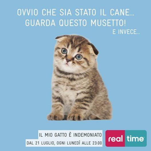 """""""Il mio gatto è indemoniato!"""" dal 21 luglio il nuovo factual di Real time"""
