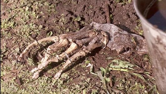 Il Segreto, resti umani (puntata del 27 aprile)
