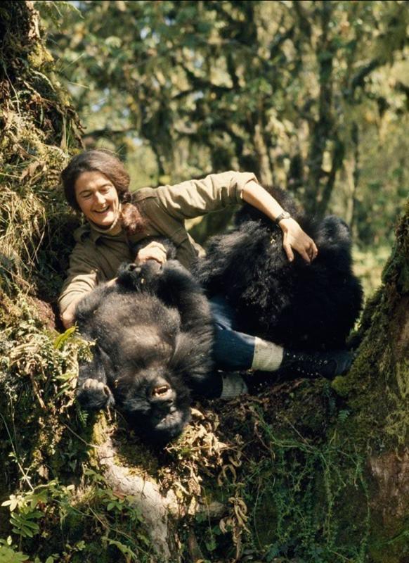 Gorilla nella nebbia – La vera storia: su National Geopgraphic si ripercorre la storia della primatologa