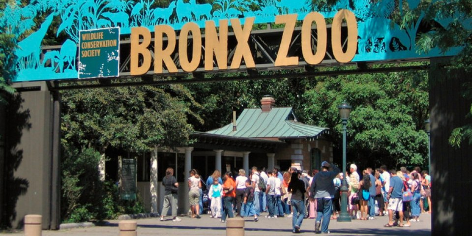 Lo zoo del Bronx Discovery channel